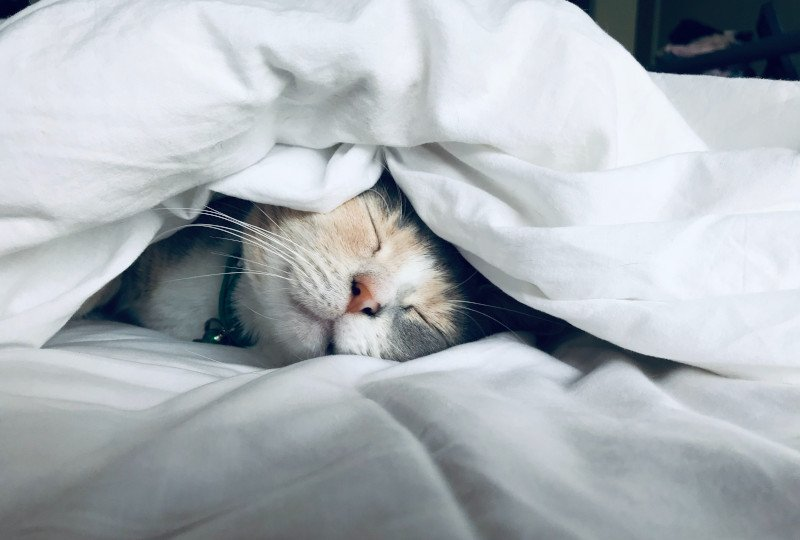Good Sleep is the best medicine